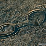 impronta fossile di barbaricina